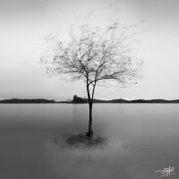 Here i Stand Alone by adityapudjo