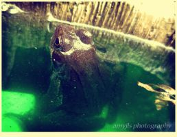 Frog in fountain by amyjls