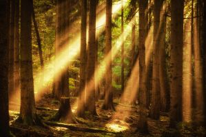 Beaming forest by erynlasgalenphotoart