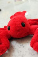 My Little Red Lobster by SomeoneSPECIAL17