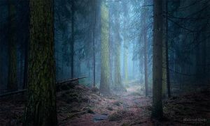 Blue forest by m-eralp