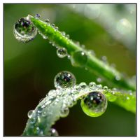 Dew on Grass by evaPM