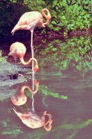 flamingo by ValerieGB