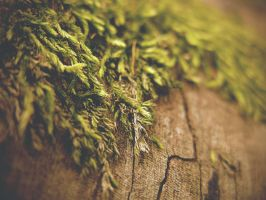 moss by srjames