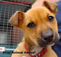 Animal Abuse Prevention Sign by Kodi9