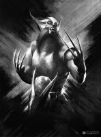 Wolverine by ourlak