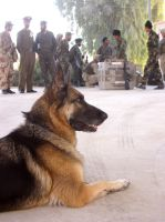 Military Police Dog by LostInTheDesert