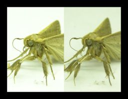 Moth-stereographic by Biogenesis
