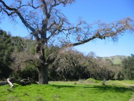 Along the Road, Sunol by leloi