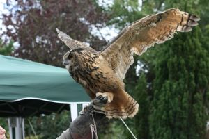 Rambo the Eagle Owl by RaeyenIrael-Stock