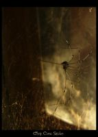 . along came spider . . by MysteryProne