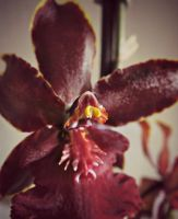 Orchid '13 by purdyphotos