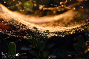Web of water in the sun light. by Lookingthroughlenses