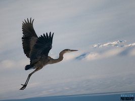 Flight by WraithPhotography