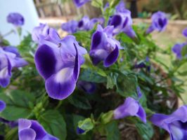 .:Purple Flowers:. by Seraphiima-Stables
