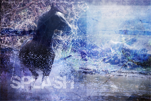 Howrse Layout: Splash by crystalcleargfx