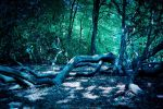Taking over the forest by MarinCristina