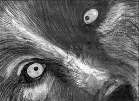 Whatcha Doing - unfinished charcoal by Summitwulf