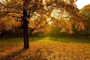 Herbstspaziergang by alexkaessner