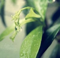Rainbud by Alessia-Izzo
