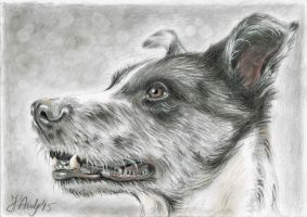 Mixed Media Dog Portrait by keopsa