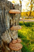 Dryad's Saddle by Little-Miss-Splendid