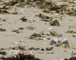 Spot the crabs by Sweetlittlejenny