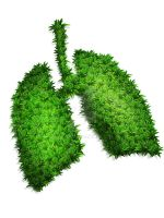lung from plant by kristiaji
