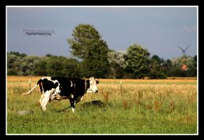 the cow by declaudi