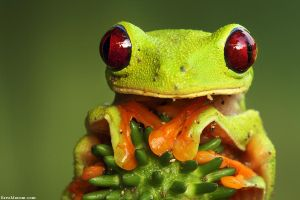 Eyes of Fire by erezmarom