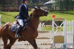 Chestnut Horse - Show Jumping stock - 11.11 by MagicLecktra