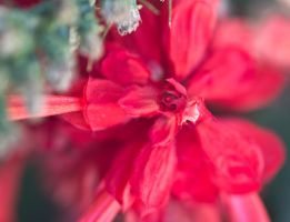 Another red flower by drewii57