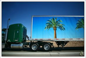 Traveling Palm Tree by ieatSTARS
