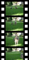 Film Strip by UrsulaPatch