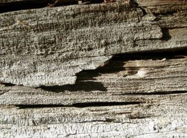 113 - old wood by WCat-stock