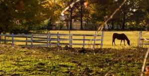 Horse and fence. by JohnDoe6
