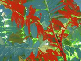 Blue And Red Leaves by MaeveHumphreys