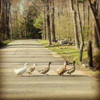 Follow the Leader by Saphira001