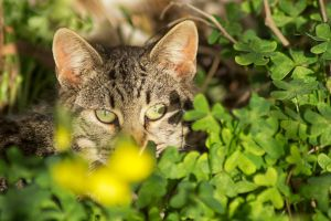 The cat in the garden 2 by hiram67