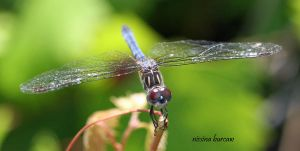 Dragonfly 2008-01 by Aries18o18