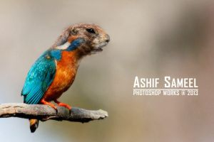 Kingfisher by sameelmk