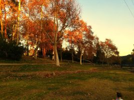 Beautiful Fall by GeneLythgow