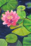 Water Lily by Anary