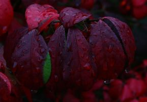 Leaves In The Rain by BTrerice