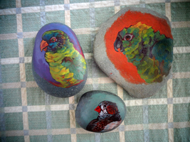 Bird Rocks: Parrots + A finch by Feyoka