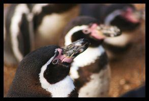 Penguin Perspective by Ubhejane