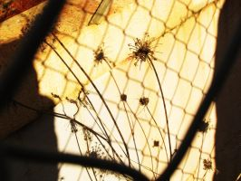shadowy weeds by chanmanthechinaman