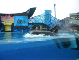 Summer Theme Parks- SeaWorld 46 by 2sisters34