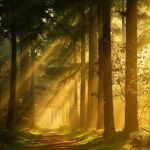The End by Nelleke
