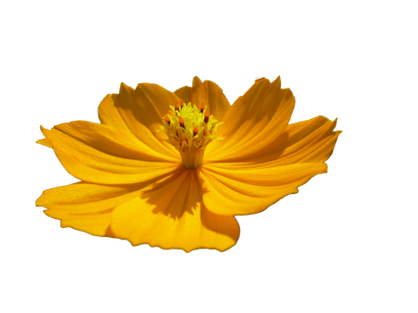 Flor Png flower png by malkarma